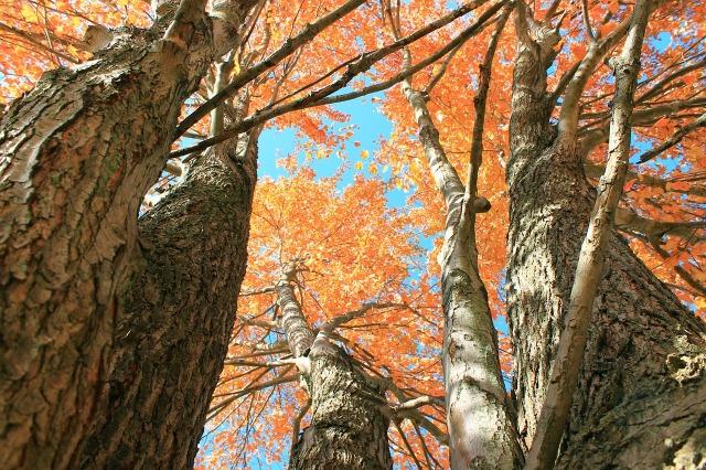 autumn-645157_1280